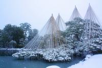 兼六園の雪吊り 冬