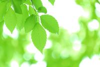 Fresh green Stock photo [2258508] Eco