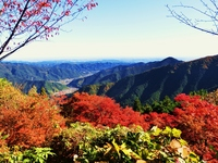 Autumn leaves of Mt. Stock photo [2261681] Mt.