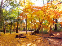 Autumn leaves in the forest of Tadas Stock photo [2262470] Forest