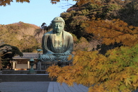 Kamakura Great Buddha and autumn leaves Stock photo [2262534] Kamakura