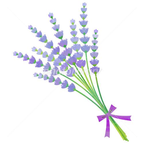 ラベンダー 花束 イラスト素材 2381274 フォトライブラリー