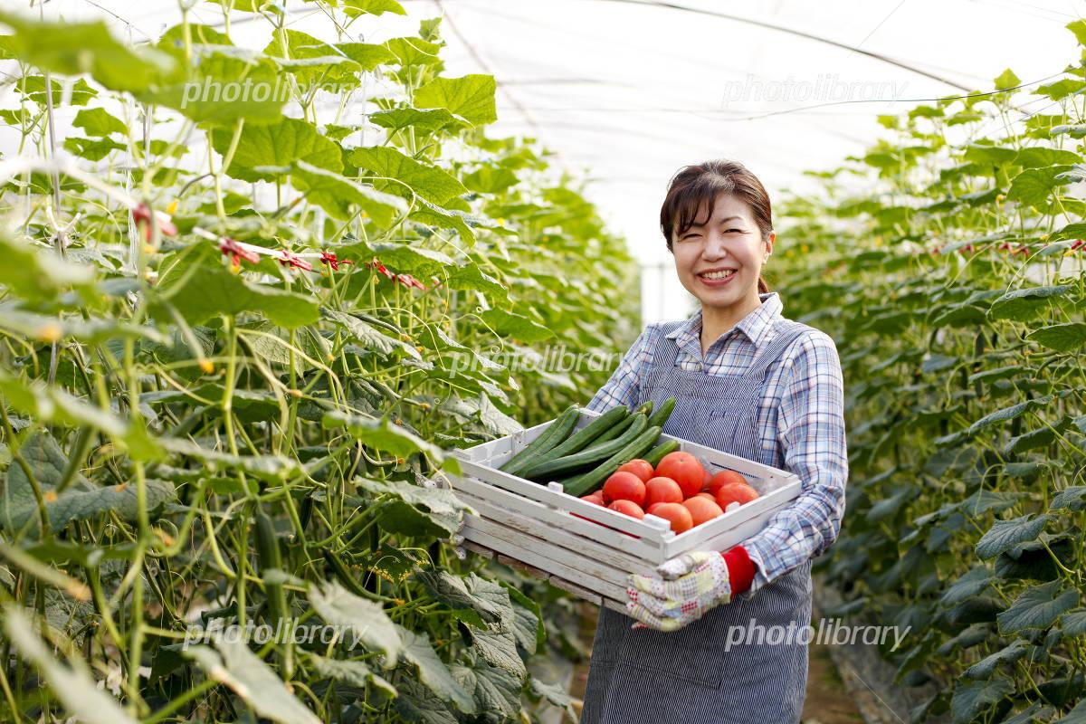 Urban agriculture Photo