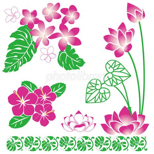 南国の花 イラスト素材 フォトライブラリー Photolibrary