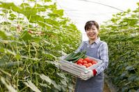 Urban agriculture Stock photo [2384560] Urban