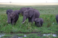 Parent and baby of Kenya wild elephants Stock photo [2388142] Elephant