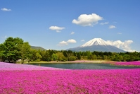 Fuji phlox Stock photo [2392541] Cherry