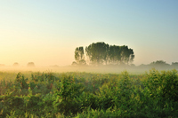 Morning mist and zelkova trees Stock photo [2503316] Fog
