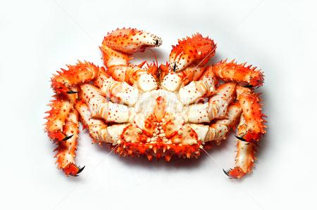 ハナサキガニ腹面 写真素材 [ 26...