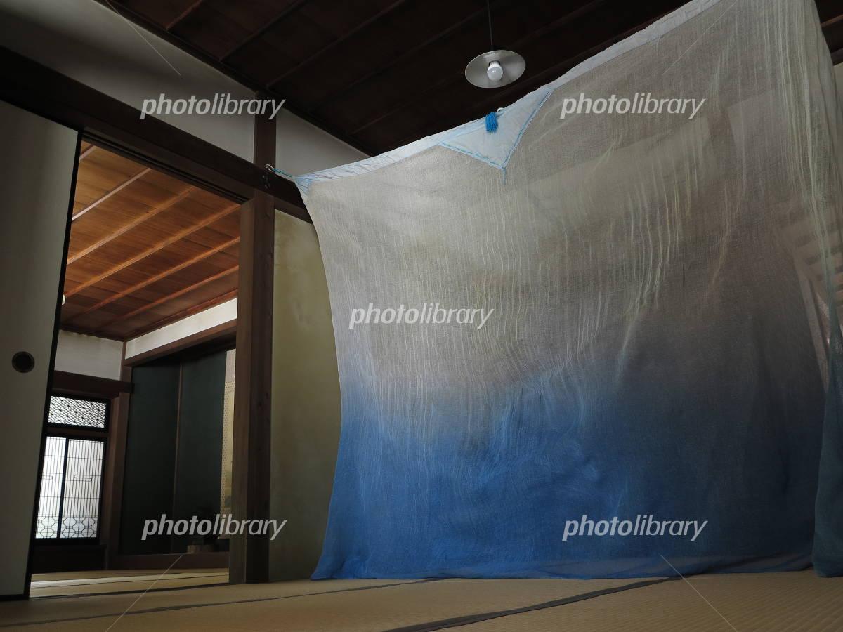 Mosquito net Photo