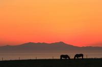 Sunrise of Shiretoko mountain range and grazing horses Stock photo [2624874] Landscape