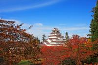 Fall of Tsuruga-jo Castle Stock photo [2625449] Tsuruga