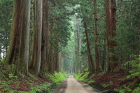 Nikko Road cedars Stock photo [2629738] Cedars