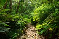 Forest walk Stock photo [2630802] Okinawa