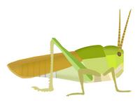 Grasshopper [2635616] Grasshopper