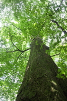 Ohki of virgin forest Stock photo [2636164] Ohki