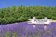 Furano Lavender Stock photo [2715347] Furano