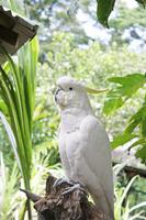 White parrot Stock photo [2720991] Parrot