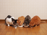 4 cats that eat rice Stock photo [2800506] CAT