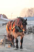 Horse-catching sled Stock photo [2884486] Horse