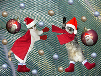 Cat Santa Stock photo [2885038] Christmas