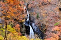 Autumn leaves of elementary and junior high Otaki Stock photo [2885766] Watarase