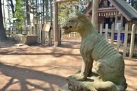宝登山神社奥宮の山犬様