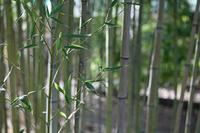 Bamboo cloth bag bamboo Stock photo [2888529] Bamboo