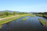 Spring of Kamo as viewed from Kyoto Izumo Road Bridge Stock photo [2890915] Kamo