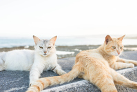 Seaside of stray cats Stock photo [2964681] Feral