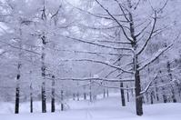 Grove of snow Stock photo [2965624] Snow