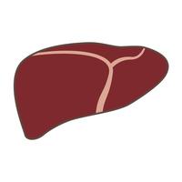 Liver [2969778] Liver