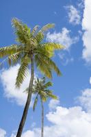 Palm tree Stock photo [2970902] Palm