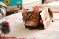 Box cat Stock photo [2972541] CAT