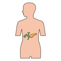 Pancreas and gallbladder [2973318] Pancreas