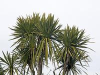 Palm Stock photo [2974240] Palm