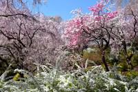 Kyoto Haraya garden garden Stock photo [3059490] Haraya