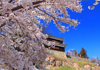 Ueda Castle cherry Stock photo [3063861] Ueda