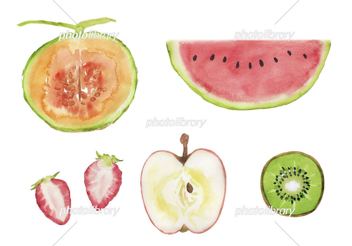 いろいろな果物の断面 イラスト素材 3140451 フォトライブラリー