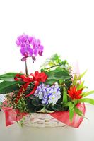 Flower basket Stock photo [3137098] Flower
