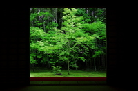 Fresh green of high-tung Institute Stock photo [3138710] Kyoto