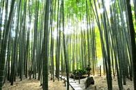 Kamakura Hokoku temple of bamboo forest Stock photo [3139378] Bamboo