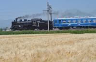 Steam locomotive running a wheat field Stock photo [3146613] Steam
