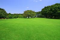 Park Stock photo [3248783] Lawn