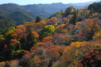Sakura autumn leaves of Yoshino Nanamagari Stock photo [3250520] Mt.
