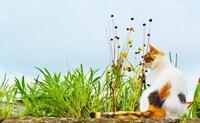 CAT Stock photo [3342426] CAT