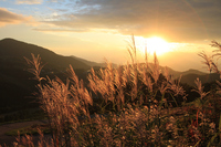 Japanese pampas grass and sunset Stock photo [3349605] Day