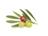 Olives Stock photo [3351097] Olive