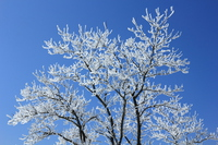 The rime on trees and a blue sky Stock photo [3438399] Rime