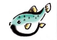 Puffer fish [3443594] Puffer